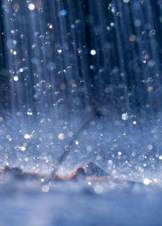 Cỏ may trong mưa